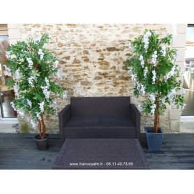 Location plante Glycine Blanche