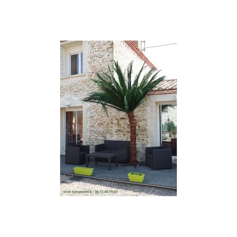 Palmier semi-naturel 2m50 en location vendee