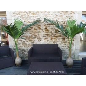 Location plante Palmier Bouteille