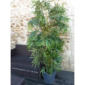 Location Bambou 1 M 80 arbuste ou plante en vendée