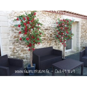 Location plante Bougainvillier Rouge